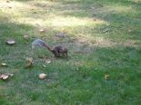 A furry friend, a squirrel of central park.