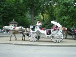 Horse and buggy outside of Central Park.