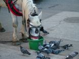 A break for a horse with pigeons trying to get some in on